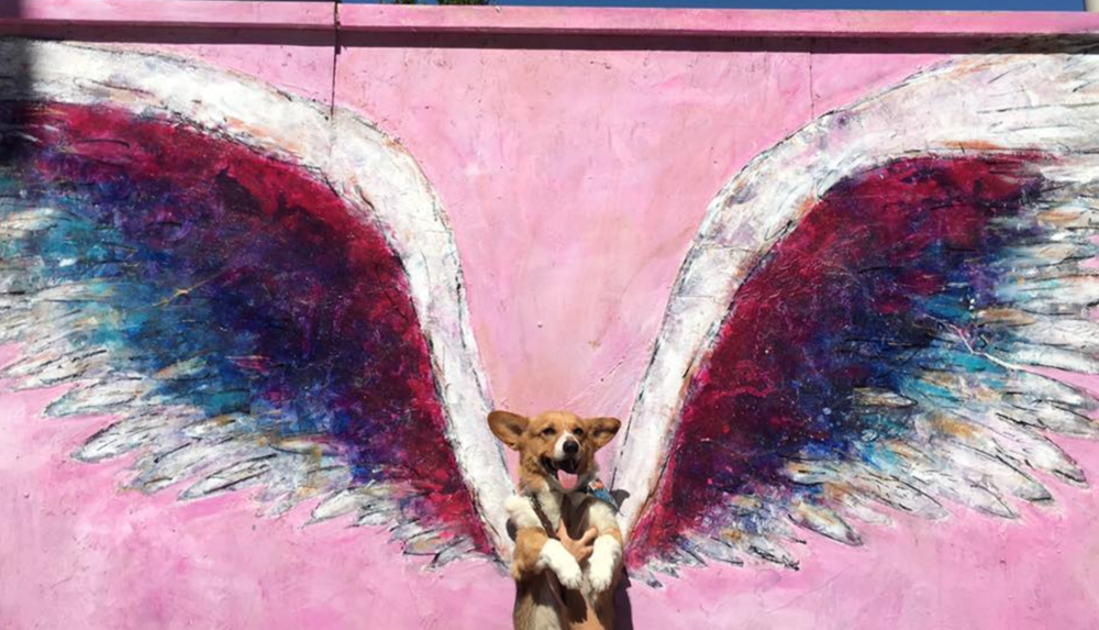 Pups that inspire - Rotti The Superdog — Woof Republic
