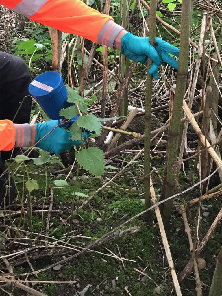 Stem Injection of Japanese Knotweed Highways