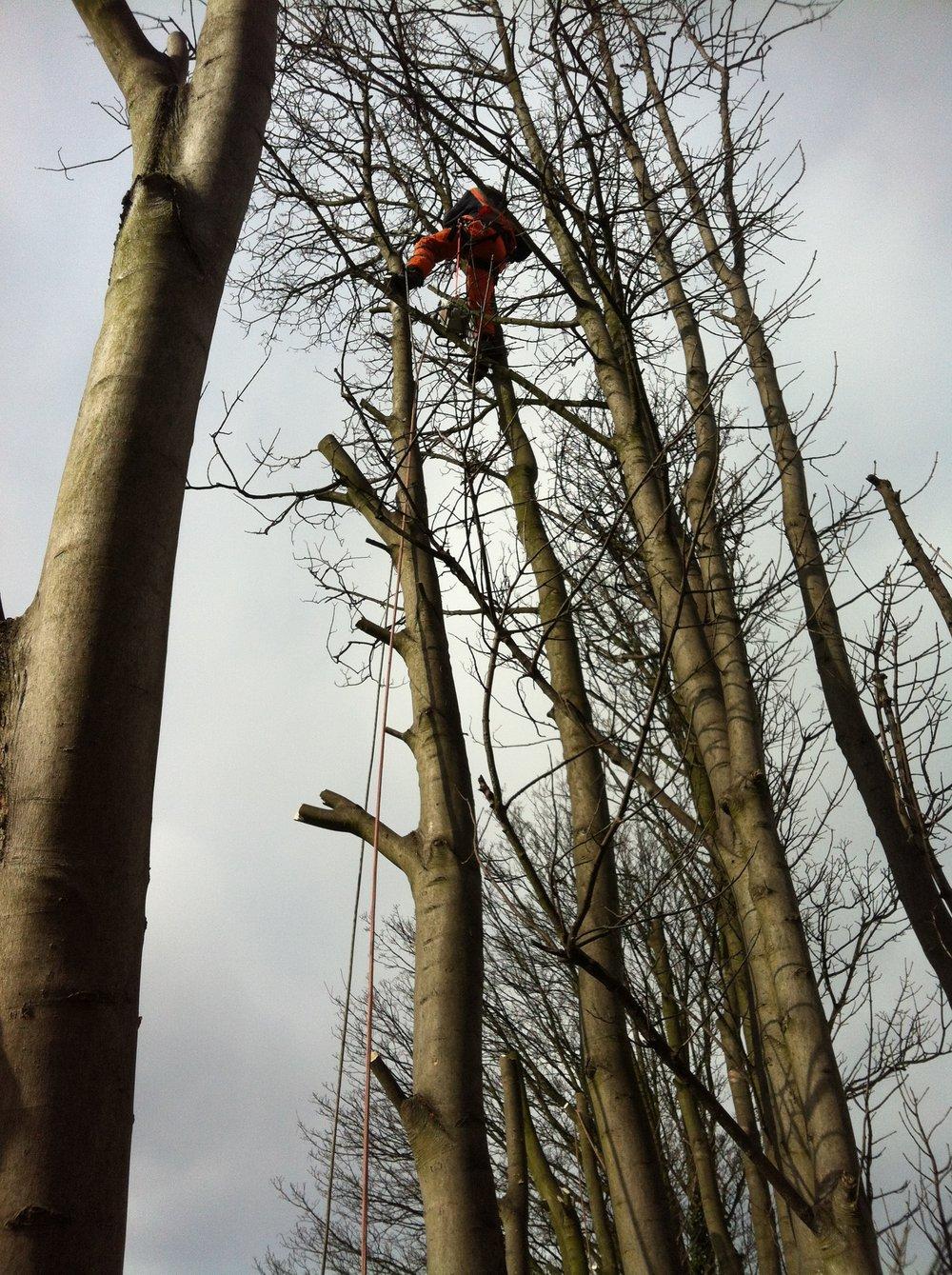 Tree climbing rail 5.jpeg