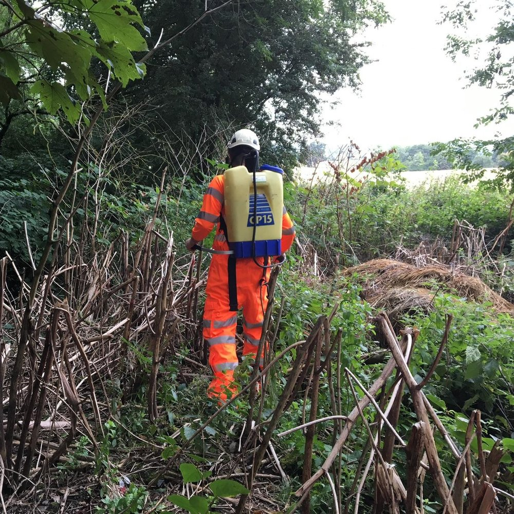 Glysophate Spraying of  Invasive Species  Japanese Knotweed within Railway Boundary