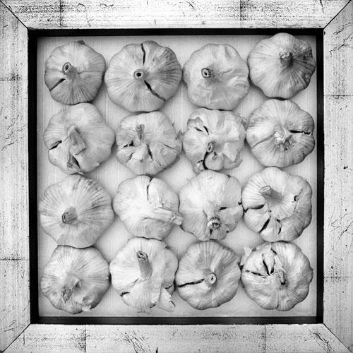 garlic6987-copy.jpg