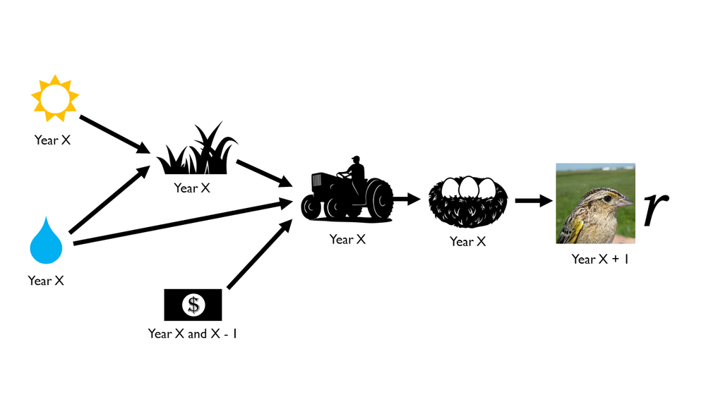 A 'meta-model' showing potential causal relationships among factors affecting Grasshopper Sparrow populations. Icons in the figures are from  The Noun Project  (Anton, S. Demushkin, G. Furtado, Hamish, Humantech, P. Rozenberg).