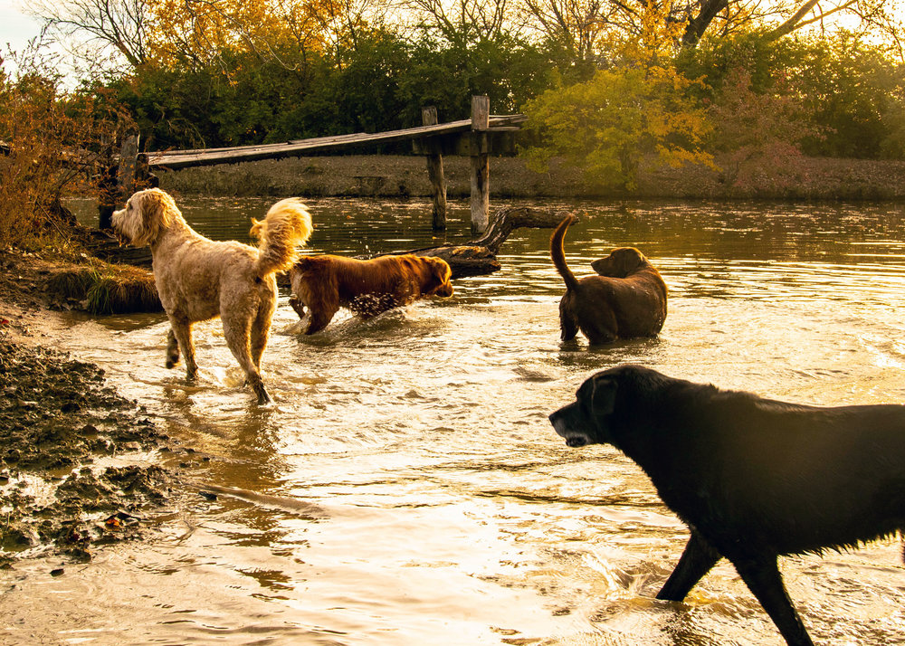 Your Dog's Home On The Range! - Since 1999 we have been serving the Northeast Kansas for quality pet services such as daycare, boarding, grooming, and more. Our goal is to enrich the lives with every dog we come into contact with and help our clients get the best from their doggy companions.Learn more