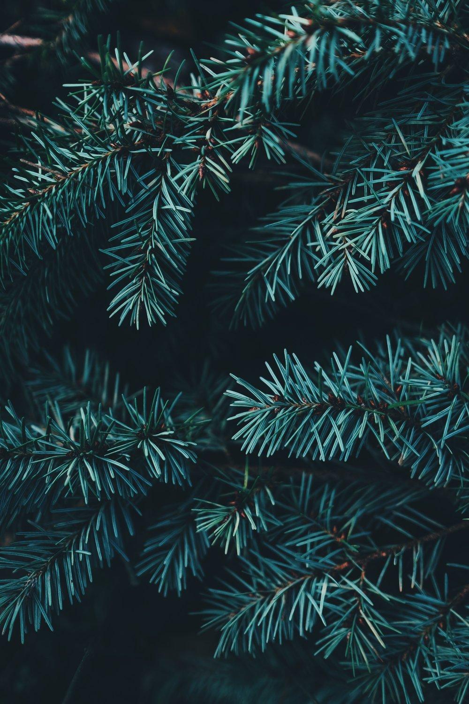 December 23, 2018 - Sermon - Doug Allison