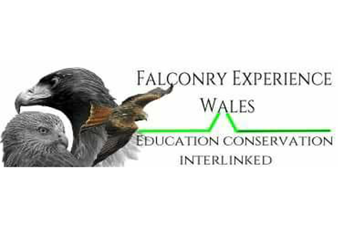 Falconry Experience Wales - Barry Mcdonald & Luce GreenFalconry Experience Wales is based on the borders of Mid and North Wales. Falconry Experience Wales is located in a mountainous wilderness working on educating the public on the behavior and ecology of Eagles and working with the community to monitor public attitude towards wildlife and birds of prey.