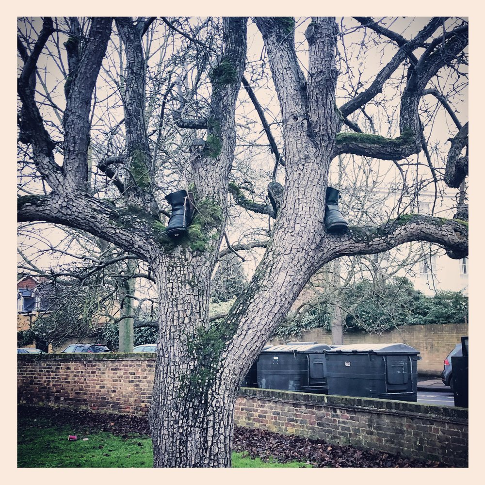 - someone left their boots in a tree…