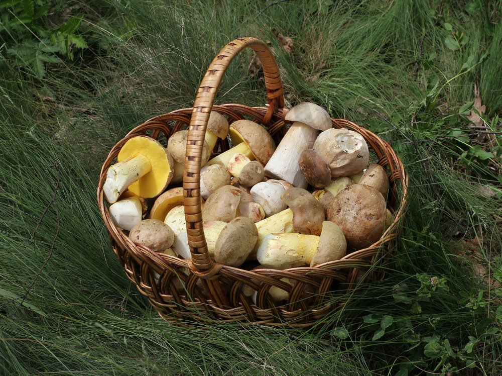 wild foraging forage mushroom cooking classes.jpg