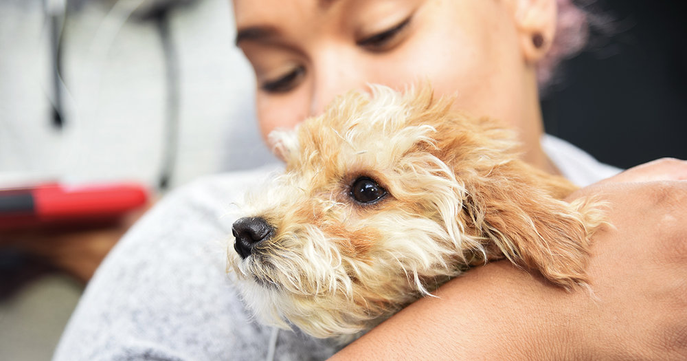 blog_sick-puppy-purchased-nyc-pet-store-recovers-aspca-help_072017_fb.jpg