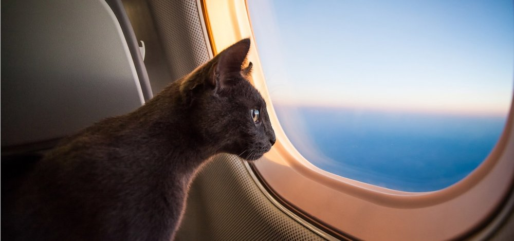 saving lives of shelter-pets - Pet Airways provides life-saving flights to relocate shelter-pets to their forever-homes.