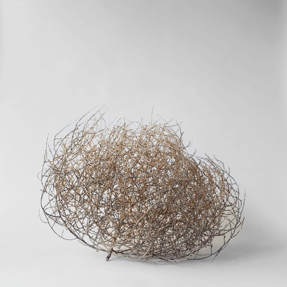 Dried Tumbleweed $25-$55