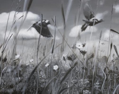 Grassland Pulse