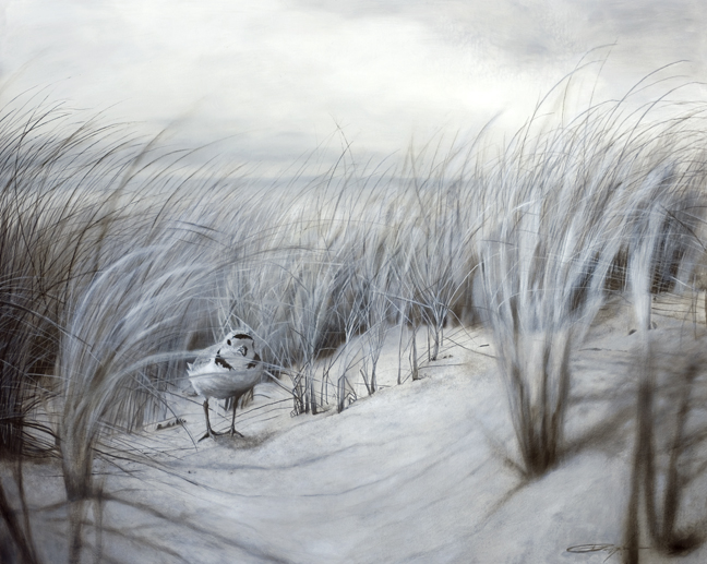 """Piping Plover   oil on board  24"""" x 30""""  available"""