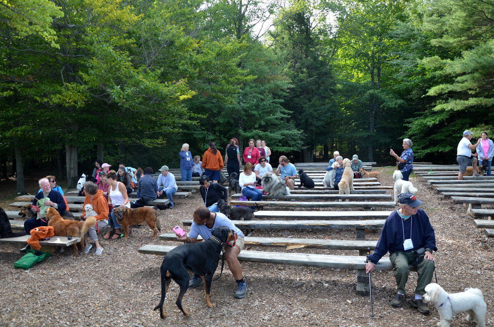 Program Methodology - Hundreds of dogs have attended Camp Unleashed. We are continually learning by observing them and from camper feedback. We have a process and protocol for introducing and mixing dogs, and managing the flow of their energy in a safe manner.