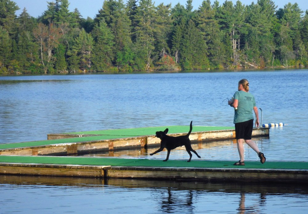 the weekend - Camp Unleashed offers dogs and their people a weekend retreat that is organized to be fun, satisfying, relaxing and educational. Daily activities are planned to keep the dogs active and participatory.