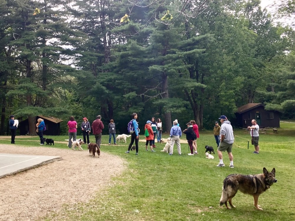 Exclusivity - When we hold a camp, we are the only group on the premises at that time. The only people you will see are other campers and camp staff. Dogs are respected and embraced by everyone. We do not allow children under 12 to attend camp. those under 18 years of age must be accompanied by their legal guardian and experienced with dogs and dog behavior.