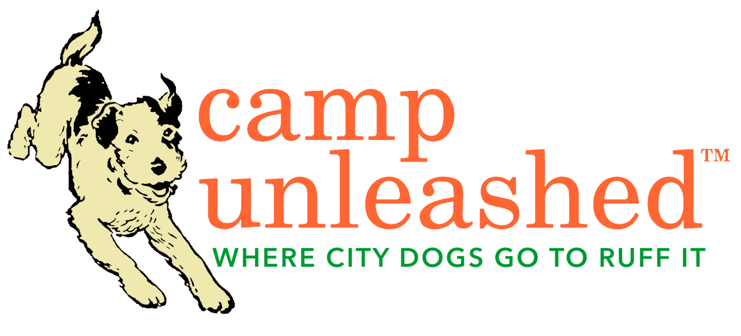 Camp Unleashed