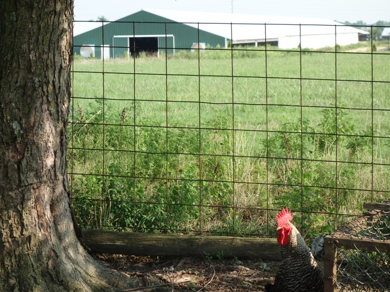 A significant issue in 2018: the inundation of mega poultry houses into northeastern Oklahoma, its affect on the people who have to live next to them and on Spring Creek's water quality and water quantity.