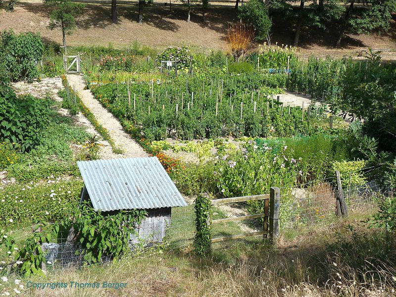 All vegetable gardens had a great variety of plants, including bush and climbing beans, kales and cabbages, cucumbers, pumpkins, melons and zucchini, as well as tomatoes, lattices of various sorts, and an occasional fruit tree.