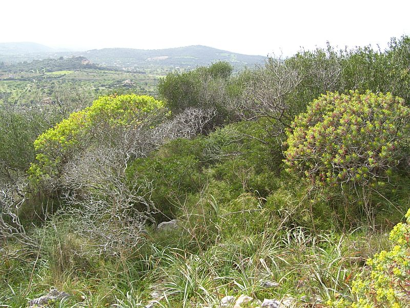 Unsustainable wood harvesting, especially in Roman times, and overgrazing (particularly from goats) have degraded the vegetation and eroded the soils in many areas along the coast. These treeless areas are called Macchie.