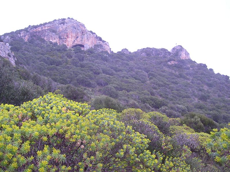 Euphorbia and various other shrubs cover this mountainside.
