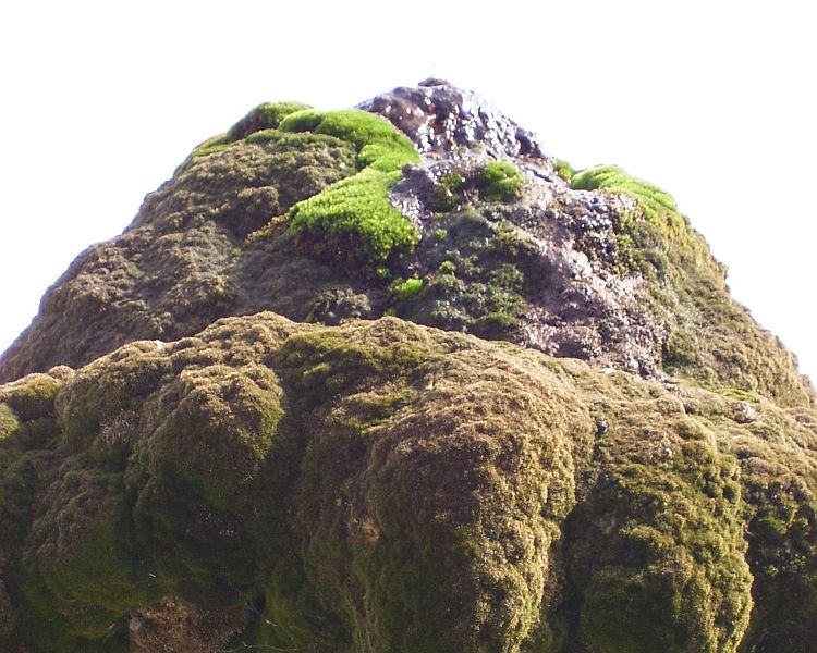 The top of the fountain looks like a Japanese Suiseki and is overgrown with moss.