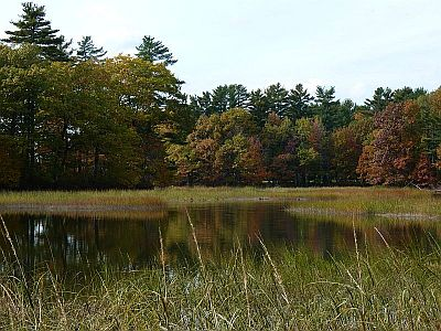 Forest w swamp and fall colors-300.jpg
