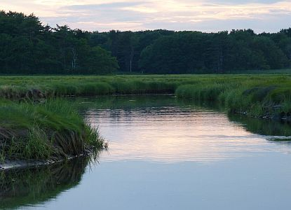 P1020652 wetland stream Rye A-300.jpg
