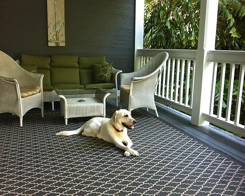 ambrosia-guest-house-pet-friendly.jpg