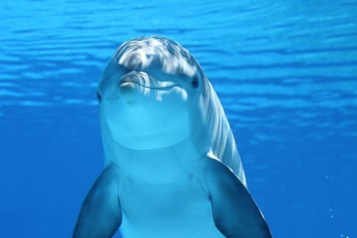 key-west-bottlenose-dolphin-close-up.jpg