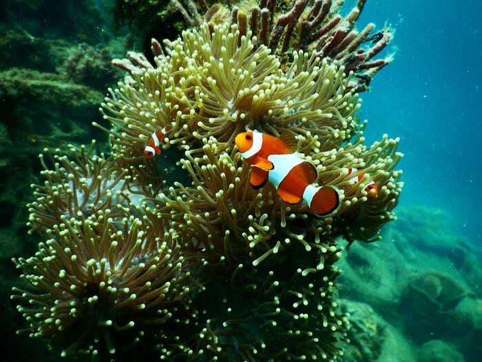 key-west-anemone-aquarium-aquatic.jpg