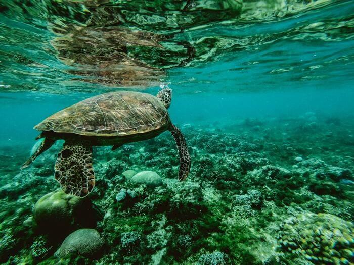 key-west-turtles-snorkeling.jpg