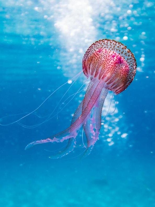 key-west-jellyfish.jpg