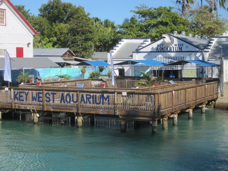 Key-west-aquarium (1).jpg