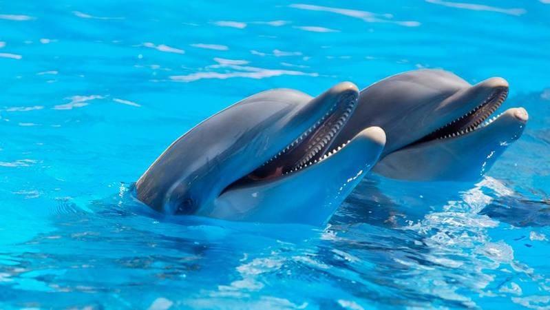 dolphin-adventure.jpg
