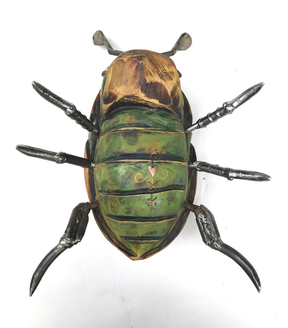 helmet beetle-09.JPG
