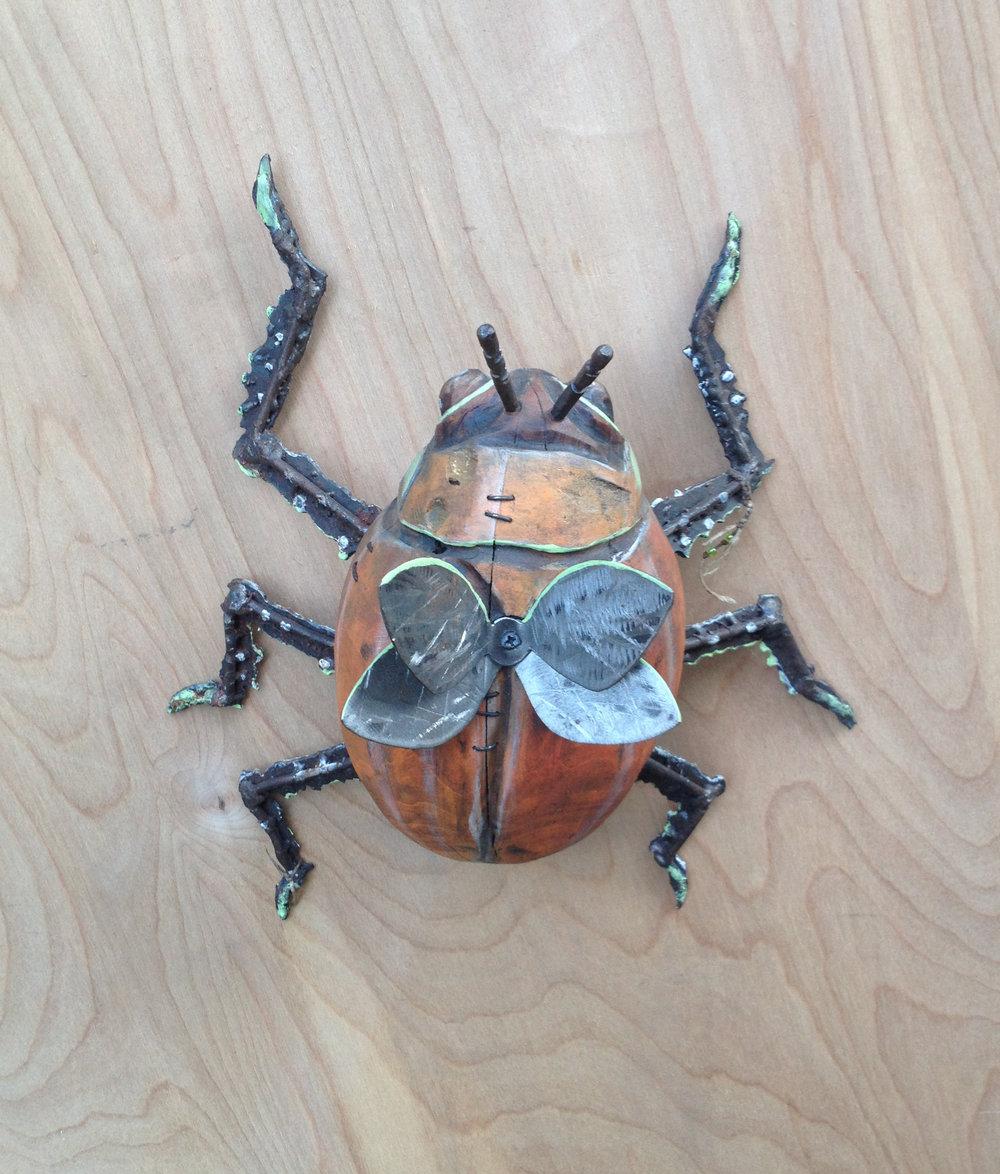 orangewingbug 7 x 12 x 14-03.JPG