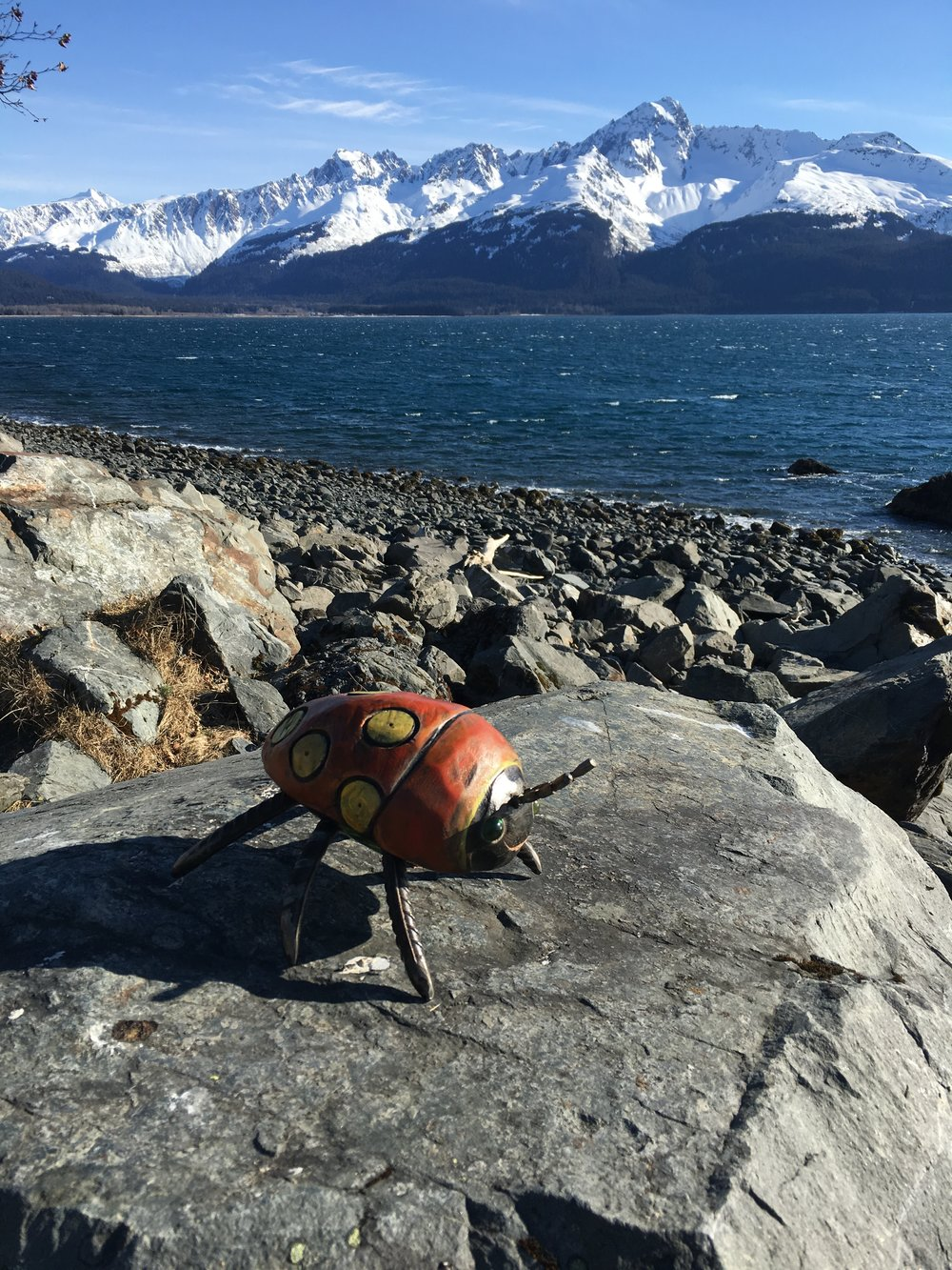 this bug traveled all the way to alaska! - Far, far and away.