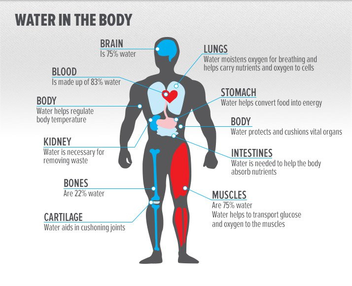 watter-in-the-body_infographic.jpg