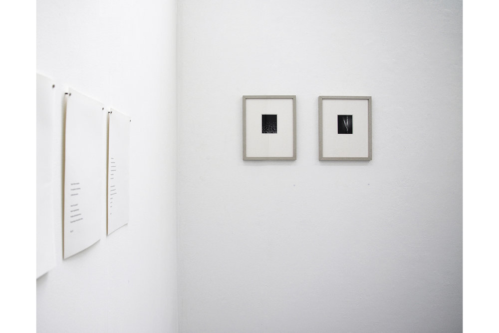 Specious-Species   - Installation shot  Pinhole prints.  2018