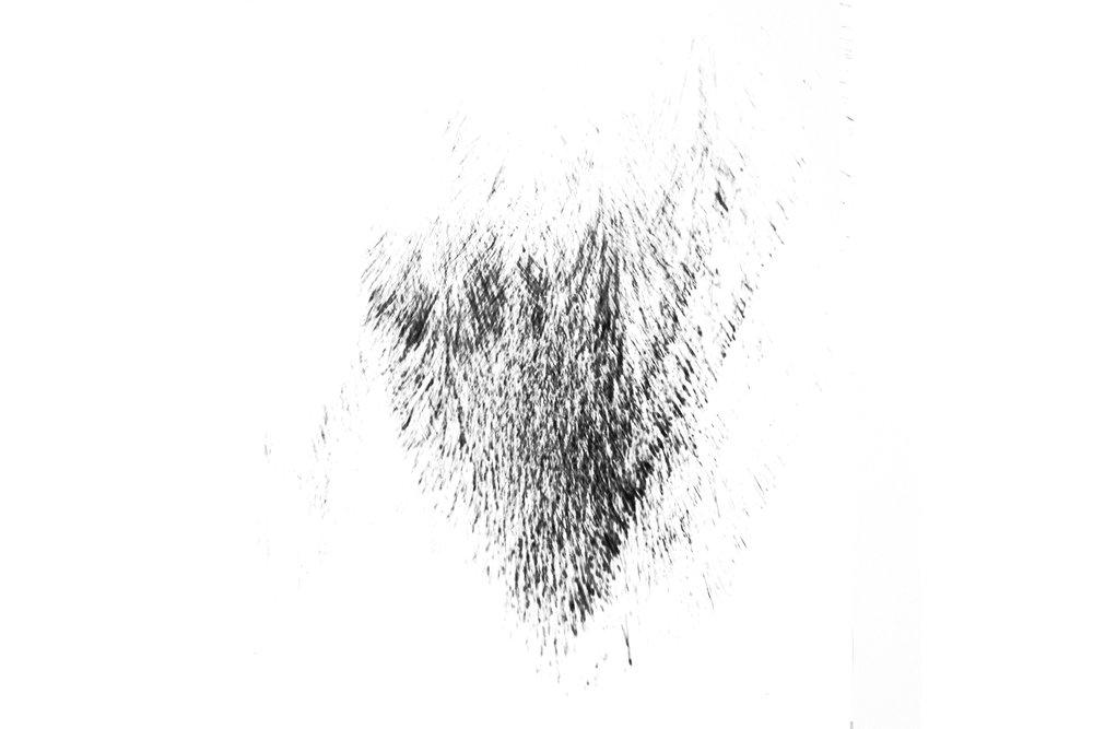 species-specious1.jpg