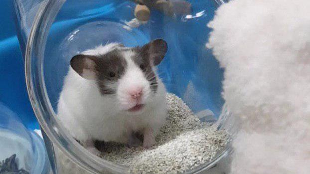 Potty Training — Hamster Society (Singapore)