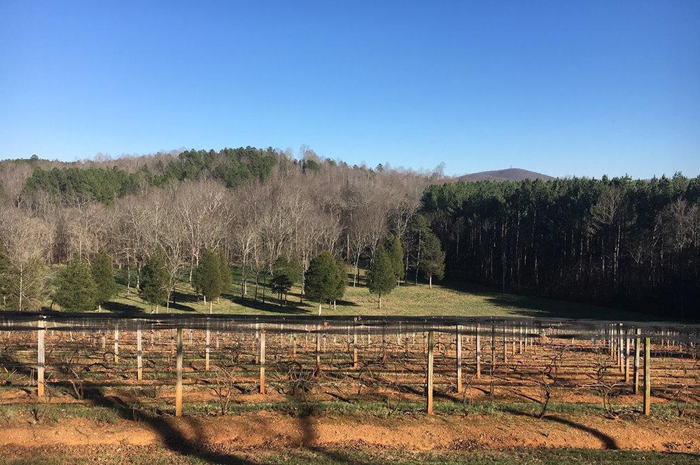 Zimmerman Vineyards North Carolina-3.jpg