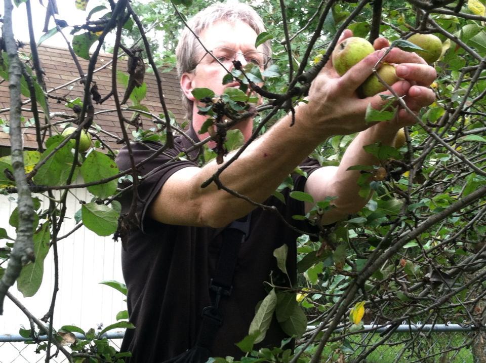 Ken Schramm of Ferndale, Michigan's Schramm's Mead picking apples. c/o Schramm's Mead