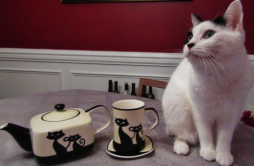 Cat Coffee Mug.JPG