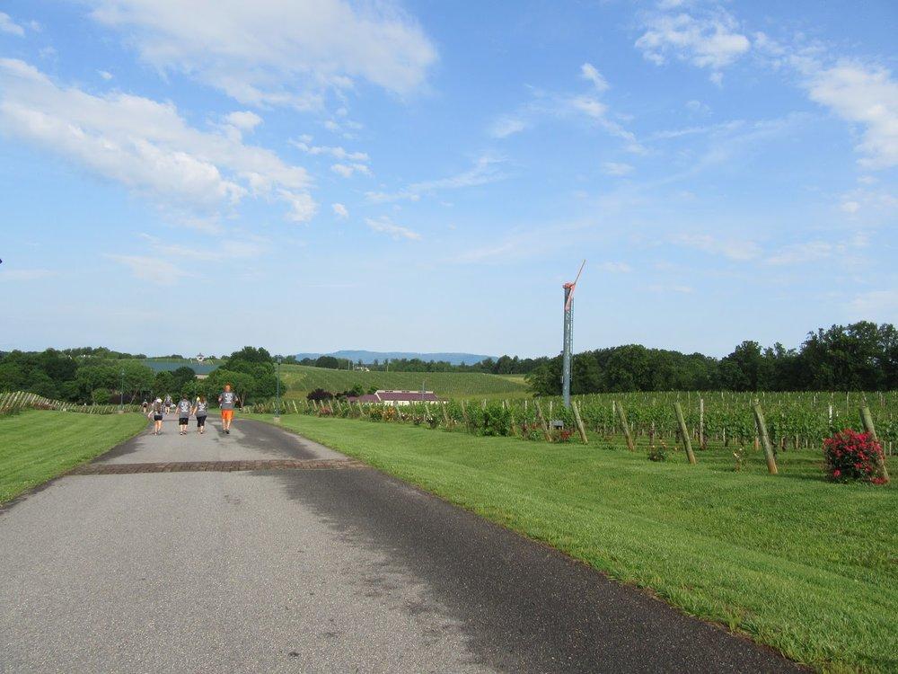 Shelton Vineyards Running the Vines.jpg