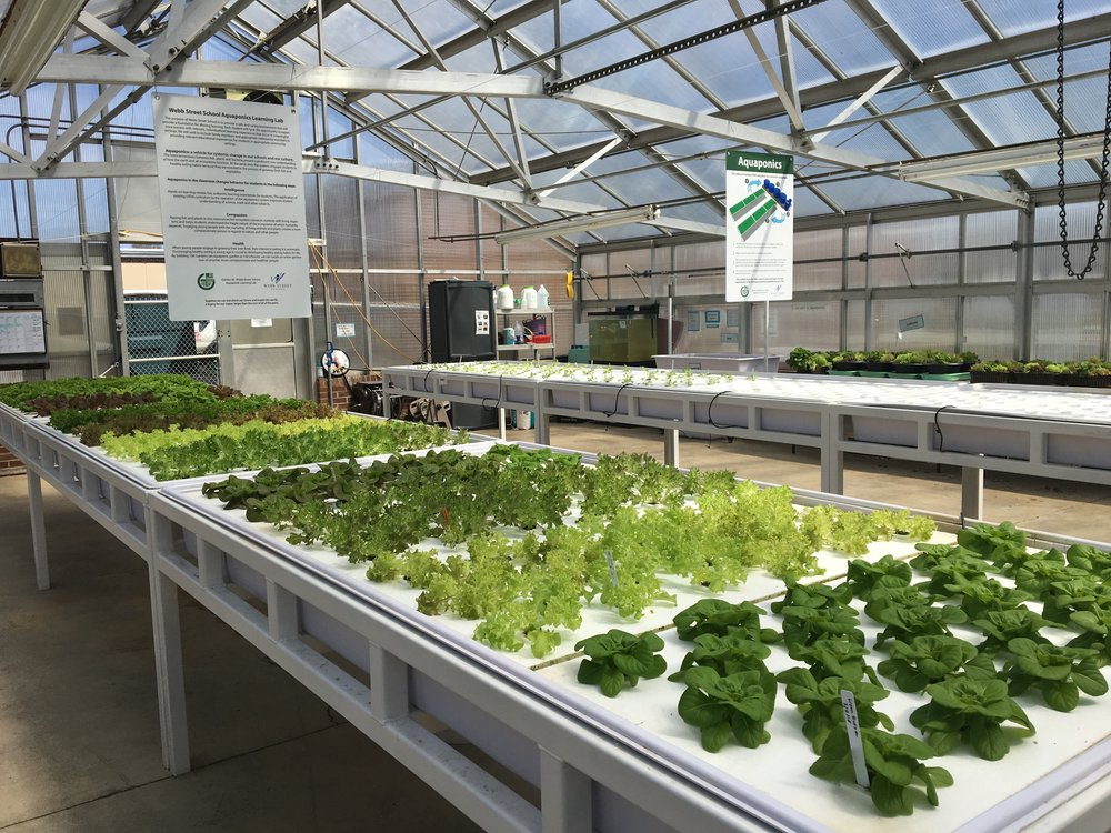In the greenhouse with consulting client 100 gardens