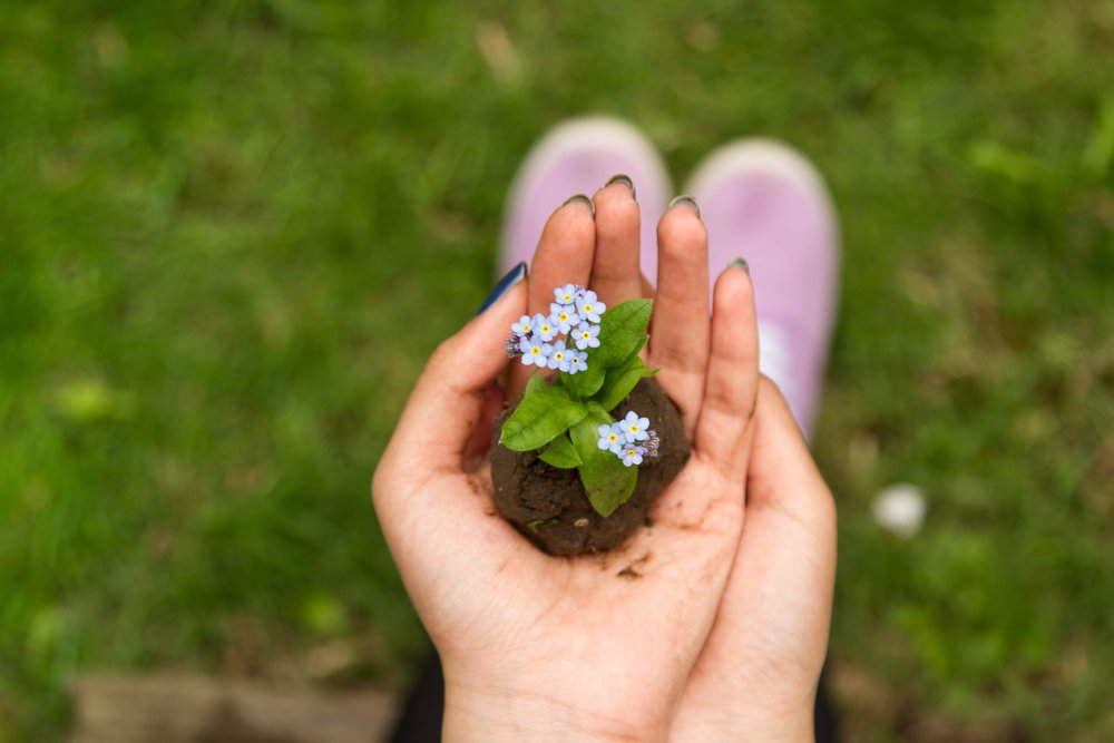 small flower.jpg
