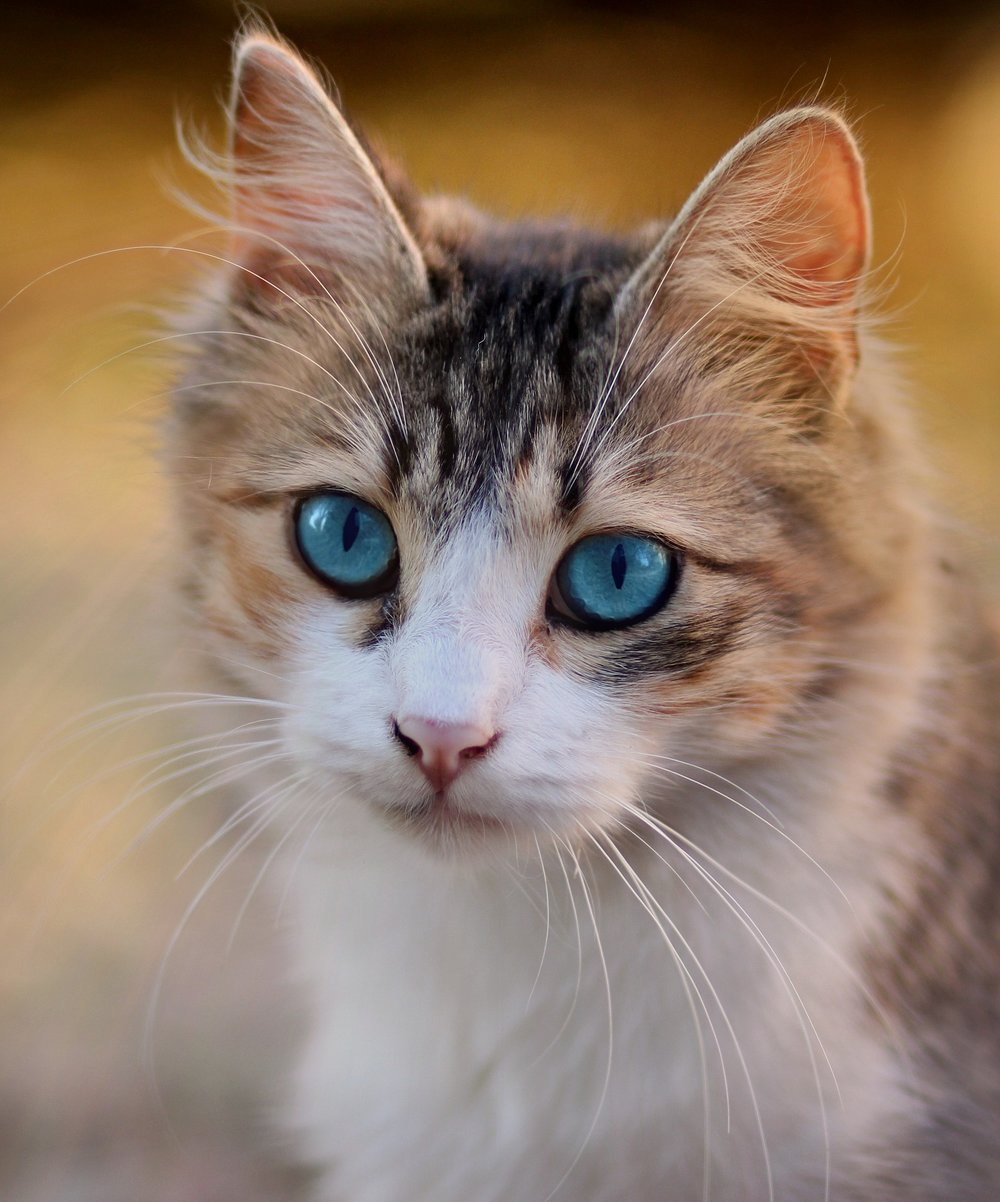 cat-3336579_1920.jpg