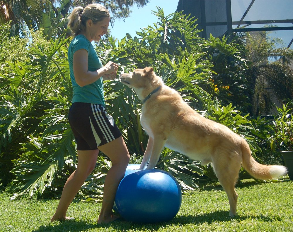 Five key aspects of canine fitness… - -Mental acuity-Balance-Strength-Cardiorespiratory fitness-Flexibility