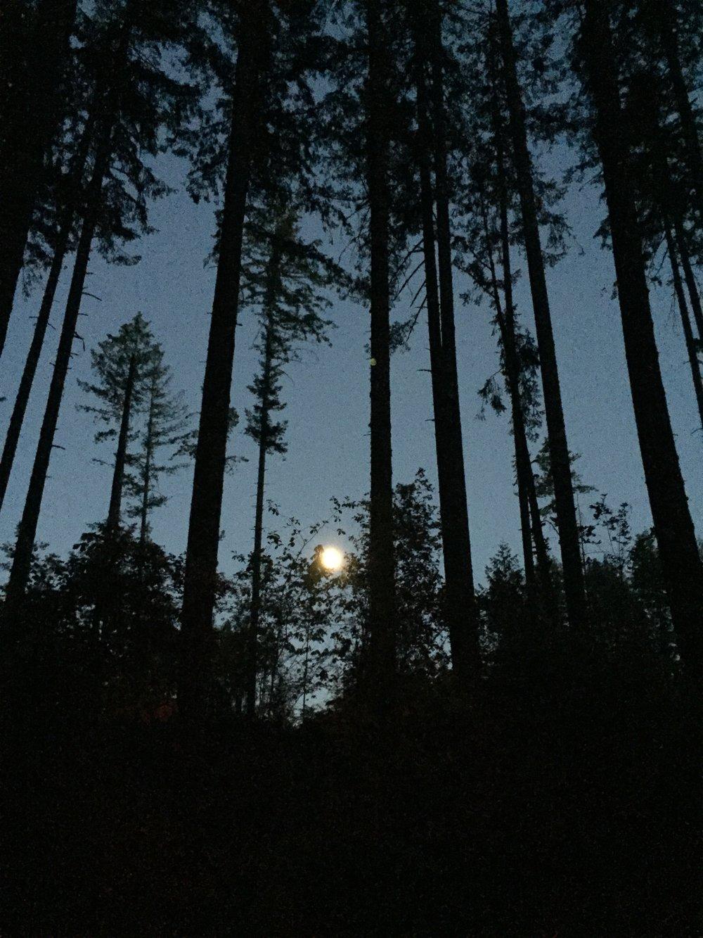 Full Moon, Olympia National Park, WA